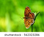 Stock photo closeup butterfly on flower butterfly and flower butterfly on a flower blurry background butterfly 562323286