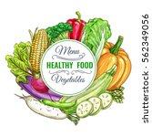 healthy vegetarian vegetables... | Shutterstock .eps vector #562349056
