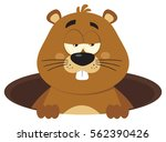cute marmot cartoon mascot... | Shutterstock .eps vector #562390426