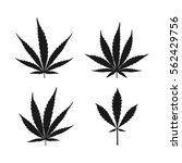 vector cannabis leaves set  ... | Shutterstock .eps vector #562429756