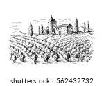 rows of vineyard grape plants... | Shutterstock .eps vector #562432732