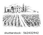 rows of vineyard grape plants... | Shutterstock .eps vector #562432942