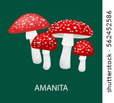 amanita muscaria  a poisonous... | Shutterstock .eps vector #562452586