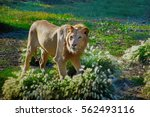 Lion In Flowers