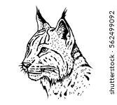 hand drawn lynx head. retro...   Shutterstock .eps vector #562499092