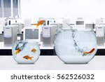 Picture Of Goldfish Moving To...