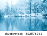 reflection of trees under snow... | Shutterstock . vector #562576366