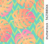 summer exotic background with... | Shutterstock .eps vector #562588066
