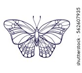 Butterfly Isolated Line Art...