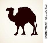 Camel Isolated On White...