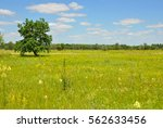 lonely tree in the meadow . a... | Shutterstock . vector #562633456