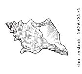Spiral Conch Sea Shell  Sketch...