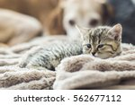 Stock photo just tired 562677112
