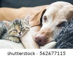 friends together | Shutterstock . vector #562677115