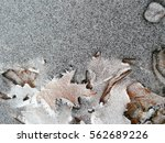 Small photo of Winter concept: advection frost on fallen leaves stuck in a frozen river
