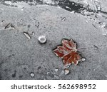 Small photo of Winter concept: advection frost on fallen leaf and plastic bottle cap stuck in a frozen river