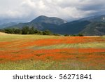 Field of Poppies in the Provence, France - stock photo