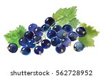 watercolor black currant . | Shutterstock . vector #562728952