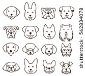 cute dogs faces line art set   Shutterstock .eps vector #562834078
