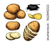 potato drawing set. vector... | Shutterstock .eps vector #562840222