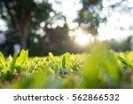 The Blur Of Grass In Garden ...