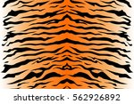 tiger fur texture repeated... | Shutterstock .eps vector #562926892