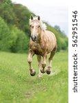 horse running on a summer... | Shutterstock . vector #562951546