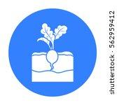 radish icon black. single plant ... | Shutterstock .eps vector #562959412