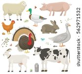 farm animals set vector. | Shutterstock .eps vector #562971532