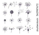 dandelion fluffy flower and... | Shutterstock .eps vector #562987672