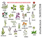 best herbal remedies for sleep... | Shutterstock .eps vector #563052508