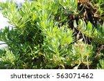 green leaves | Shutterstock . vector #563071462