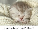 Stock photo cute little gray kitten sleeps on a soft blanket 563108572