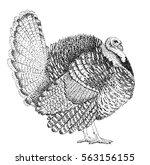 turkey illustration old... | Shutterstock . vector #563156155