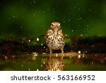 Wildlife Photo Of  Song Thrush...