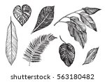 tropical palm leaves graphic set | Shutterstock .eps vector #563180482