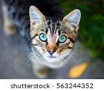 Cat With Amazing Eyes