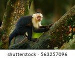 green wildlife from costa rica. ... | Shutterstock . vector #563257096