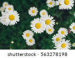 field big daisies in the green... | Shutterstock . vector #563278198