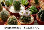 succulents and cactus blooming... | Shutterstock . vector #563364772