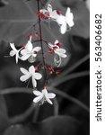 flower | Shutterstock . vector #563406682