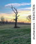 Small photo of Dead tree at sunset, taken near the village of Abridge in Essex on a winter's evening.