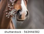Horse Easter Greeting With...