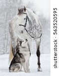 The Dog And The Horse. Alaskan...