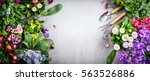 Stock photo floral gardening background with variety of colorful garden flowers and gardening tools on concrete 563526886