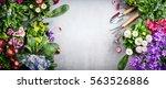 floral gardening background... | Shutterstock . vector #563526886