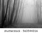 Black And White Image Of Misty...
