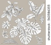 hand drawn branches and leaves...   Shutterstock .eps vector #563586355