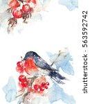 watercolor bullfinch sitting in ... | Shutterstock . vector #563592742