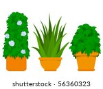Plant collection indoor - Agave - vector - stock vector